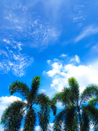 Fantastic soft white clouds against blue sky with green palm trees abstract background.