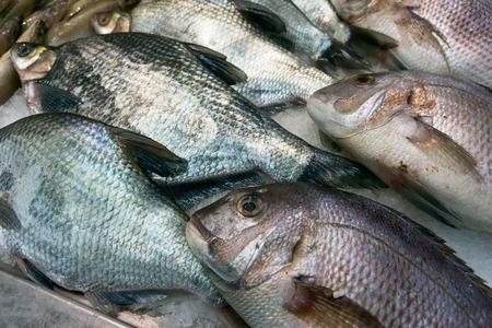 fishy: Fish Stock Photo