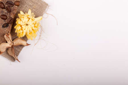 some dried brown decoration and flower in the corner with copyspace Stock Photo