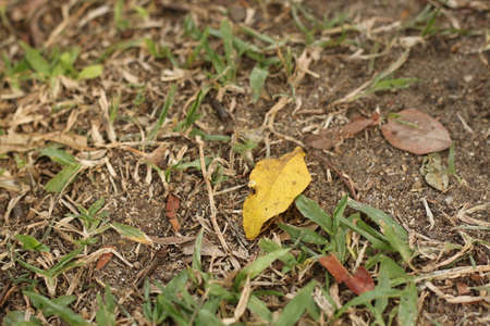 lied: The leaf is lied on the ground