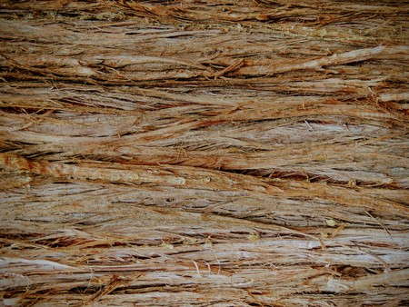 Close up tree bark texture of background in Oquirrh Mountains on the Wasatch Front in Salt Lake County Utah USA. Stock Photo