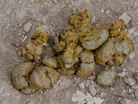 Horse dung close-up for background, detailed, on the dirt horseback trails through trees on the Yellow Fork and Rose Canyon Trails in Oquirrh Mountains on the Wasatch Front in Salt Lake County Utah USA. Stockfoto