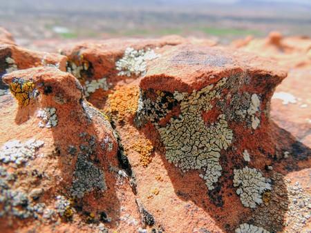 Multi color and types Crustose Lichen or algae on a desert sandstone boulder in Southwestern Utah, USA near St. George Stock Photo