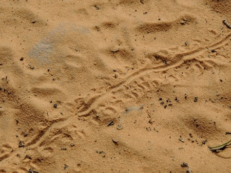 Lizard footprints in the sand trails, detailed close up macro in red cliffs desert reserve in by St George Utah, USA Stock Photo