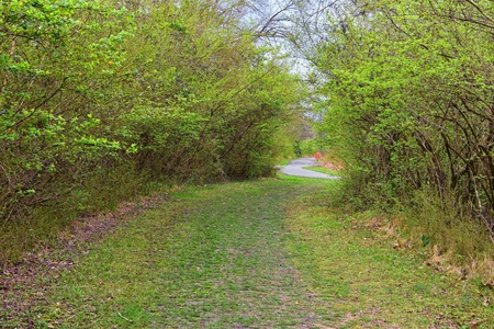 Views of Nature and Pathways along the Shelby Bottoms Greenway and Natural Area Cumberland River frontage trails, bottomland hardwood forests, open fields, wetlands, and streams, Nashville, Tennessee. United States.