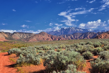 Views of Red Mountain Wilderness and Snow Canyon State Park from the Millcreek Trail and Washington Hollow by St George, Utah in Spring bloom in desert. United States. Zdjęcie Seryjne