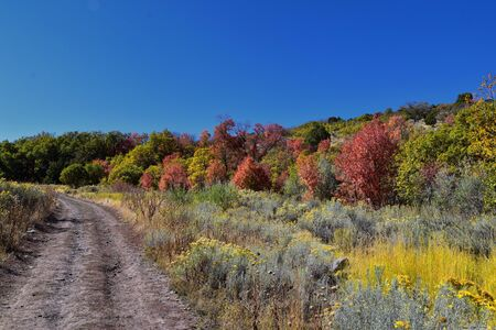 Hiking Trails in Oquirrh, Wasatch, Rocky Mountains in Utah Late Fall with leaves. Panorama forest views backpacking, biking, horseback through trees on the Yellow Fork and Rose Canyon by Salt Lake. United States.