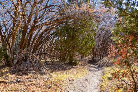 Hiking Trails in Oquirrh, Wasatch, Rocky Mountains in Utah Late Fall with leaves. Backpacking, biking, horseback through trees in the Yellow Fork and Rose Canyon by Salt Lake City. United States of America, USA.