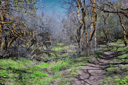 Hiking Trails in Oquirrh, Wasatch, Rocky Mountains in Utah early spring with leaves. Backpacking, biking, horseback through trees in the Yellow Fork and Rose Canyon by Salt Lake City. United States of America, USA.