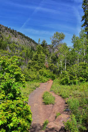 Hiking Trail to Lake Blanche forest and mountain. Wasatch Front Rocky Mountains, Twin Peaks Wilderness,  Wasatch National Forest in Big Cottonwood Canyon in Salt Lake County Utah. United States. Stock fotó
