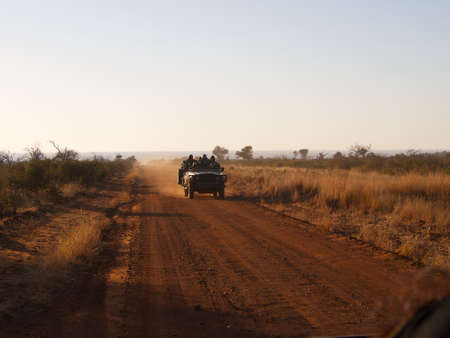 veld: An open 4x4 races along a dirt road in the South African Veld in the early morning light Editorial