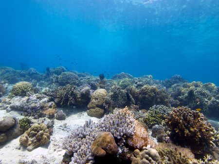soft corals: Its always great to see large areas of healthy hard and soft corals and that Stock Photo