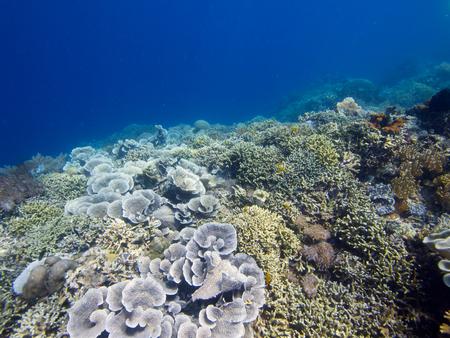 pristine coral reef: E 'sempre bello vedere grandi aree di coralli duri e molli sani e che