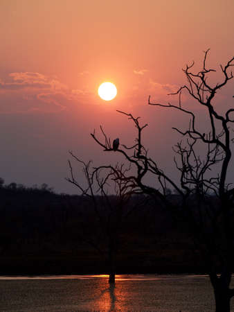 south african birds: An African fish eagle silhouetted against the setting South African sun. Madikwe Game Reserve. Stock Photo