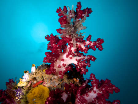 soft corals: Beautiful soft corals abound on the spectacular reefs of Raja Ampat, Wonderful Indonesia Stock Photo