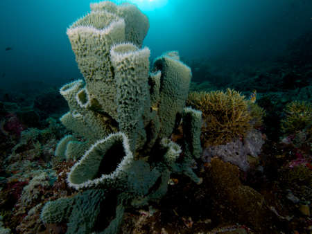 abound: Beautiful sponges abound on the spectacular reefs of Raja Ampat, Wonderful Indonesia