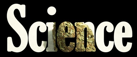 Weed, Medical Marijuana Grunge Detail and Background photo