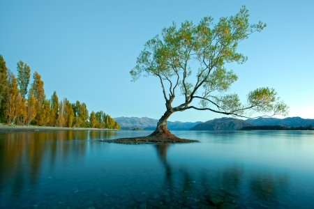 Spring Tree in Lake photo