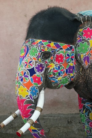 Decorated elephant at the annual elephant festival in Jaipur, India Stock Photo