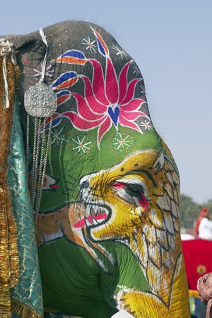 Decorated elephant at the annual elephant festival in Jaipur, India photo