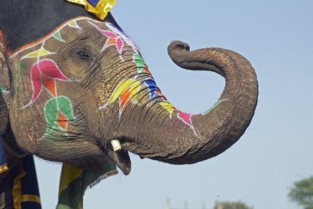 elephant�s: Elefante decorado con obras de arte en su cara saludando con su tronco en un festival de elefantes en la India