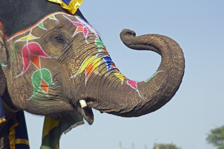 Elephant decorated with art work on its face saluting with its trunk at an elephant festival in India photo