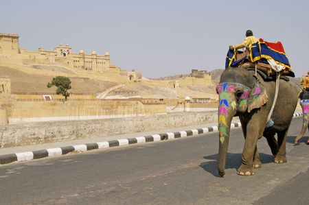 Elephant with decorated head and trunk walking along the road at Amber Fort in Jaipur, Rajasthan, India.
