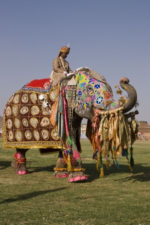 painted toes: Jaipur, India - March 21, 2008: Decorated elephant with trunk raised in salute at the annual elephant festival in Jaipur, Indi