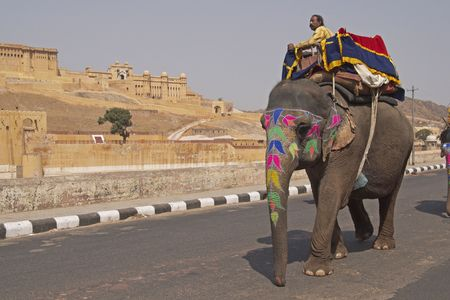 Jaipur, India - March 10, 2009: Decorated elephant on the road at Amber Fort in Jaipur, Rajasthan, India. Stock Photo - 7996316