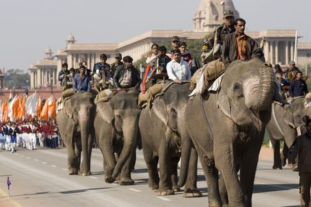 Delhi, India - January 21, 2008: Elephants walking down the Raj Path in preparation for the Republic Day Parade. New Delhi, India Stock Photo - 8409701