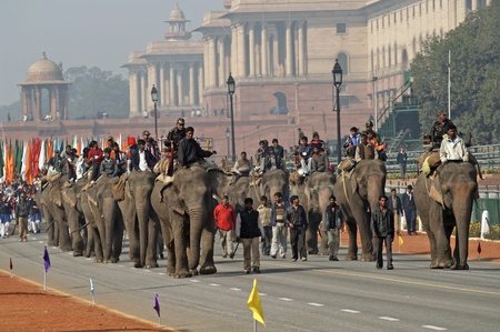 Delhi, India - January 18, 2007: Elephants parading down the Rajpath in preparation for the Republic Day celebrations in Delhi, India Stock Photo - 8409720