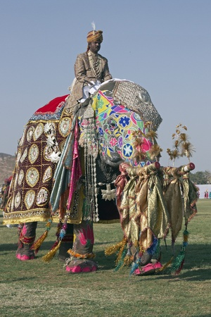 Jaipur, India - March 21, 2008: Decorated elephant with trunk raised in salute at the annual elephant festival in Jaipur, India