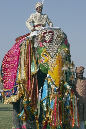 jaipur: Jaipur, India - March 21, 2008: Mahout riding a decorated elephant at the annual elephant festival, Jaipur, India