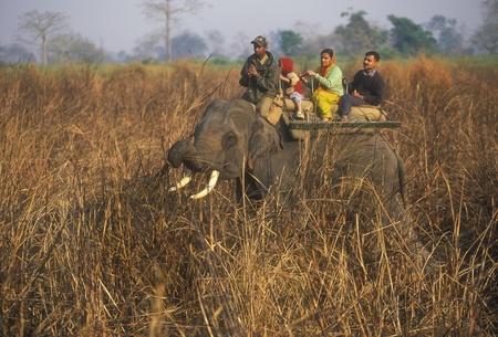 assam: Kaziranga National Park, Assam, India - March 19, 2007: Domesticated elephant carrying tourists on safari in Kaziranga National park, Assam, India