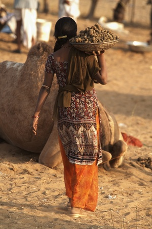 Pushkar, Rajasthan, India - November 19, 2007: Woman carrying large bowl filled with camel dung for use as fuel at the Pushkar Camel Fair Rajasthan India