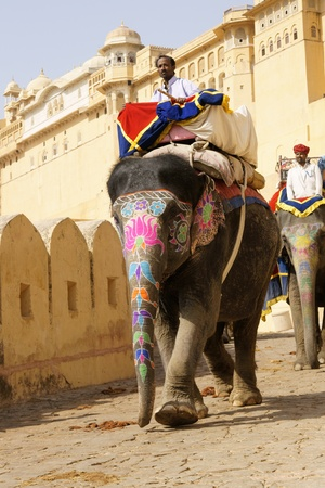 Jaipur, India - March 10, 2009: Decorated elephant descend from Amber Fort in Jaipur, Rajasthan, India.