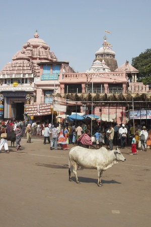 puri: Puri, Orissa, India - May 14, 2008: People and cow in the market square in front of Jagannath Hindu Temple. Puri, Orissa, India. 12th Century AD Editorial