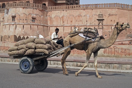 bikaner: Bikaner, India - July 18, 2007: Camel cart loaded with sacks passing Junagarh Fort in Bikaner, India