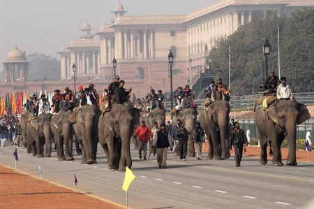 delhi: Delhi, India - January 18, 2007: Elephants marching down Raj Path in preparation for the Republic Day celebrations in New Delhi, India
