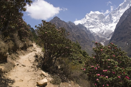 himalaya: Trekking path through rhododendron forest and snow capped mountains en route to Everest Base Camp in the Himalayan Mountains of Nepal.