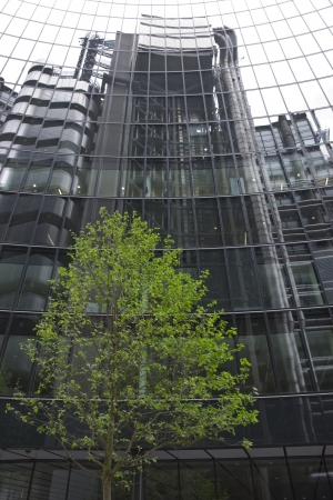 Green tree in front of a glass fronted office building in the City of London, England, United Kingdom Stock Photo - 13897402