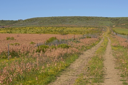 Flower filled fields near Nieuwoudtville in the Northern Cape of South Africa photo