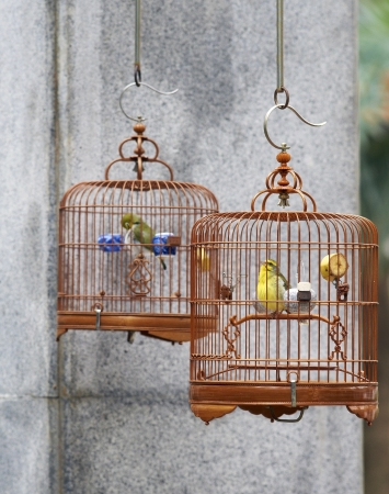 Caged song birds in the Yuen Po Street Bird Garden in Kowloon, Hong Kong  Standard-Bild