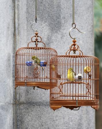 Caged song birds in the Yuen Po Street Bird Garden in Kowloon, Hong Kong  Stock Photo