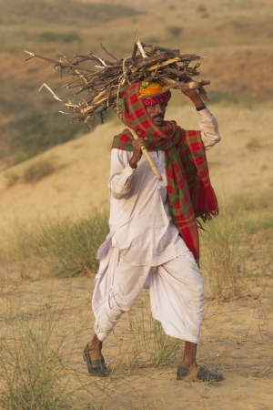 herder: Pushkar, Rajasthan, India - November 8, 2008: Camel herder carrying wood for a camp fire at the annual Pushkar Fair in Rajasthan, India