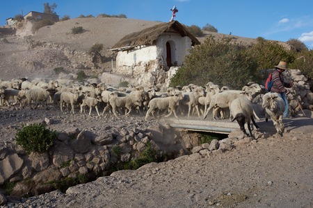 A shepherd with a flock of sheep crossing a bridge over a stream in the small town of Putre in northern Chile. photo