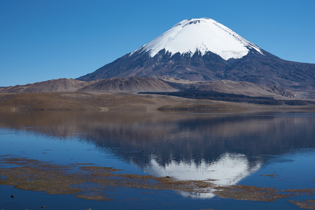 Snow capped Parinacota Volcano, 6,324m high, reflected in Lake Chungara in the Altiplano of northern Chile. photo