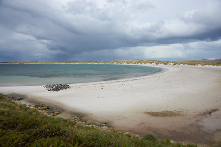 yorke: Curved sandy beach of Yorke Bay in the Falkland Islands. The bay is home to a breeding colony of Magellanic Penguins (Spheniscus magellanicus) and is close to the Stanley, capital of the Falkland Islands.