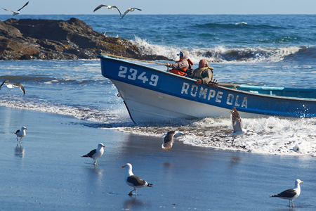 safer: Curanipe Chile  April 22 2015: Fishing boat coming ashore on the sandy beach in the fishing village of Curanipe Chile. Once the boats are beached on the sand a tractor is used to pull the boats to safer ground.