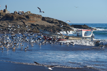 safer: Curanipe Chile  April 22 2015: Fishing boat coming ashore through a flock of seagulls on the sandy beach in the fishing village of Curanipe Chile. Once the boats are beached on the sand a tractor is used to pull the boats to safer ground. Editorial